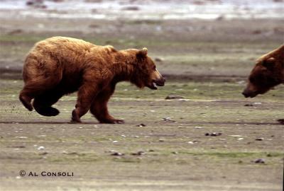 bear2j.jpg