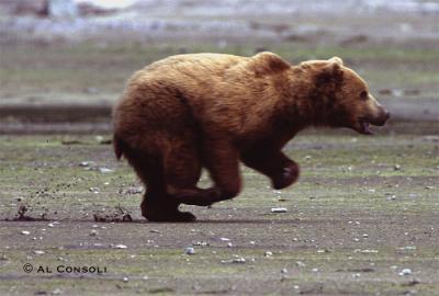bear3j.jpg