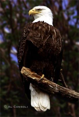 EagleTree1J.jpg