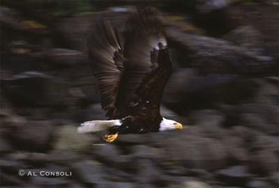 EagleFly2J.jpg