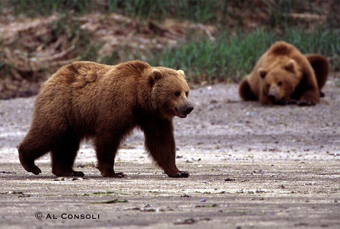 bear1j.jpg