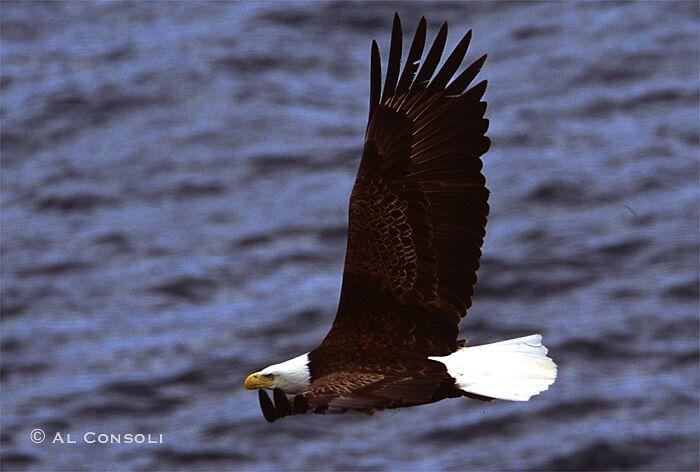 EagleBj.jpg