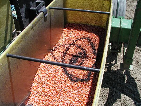 seed corn and graphite.JPG