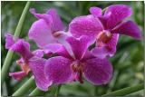 Orchid 14