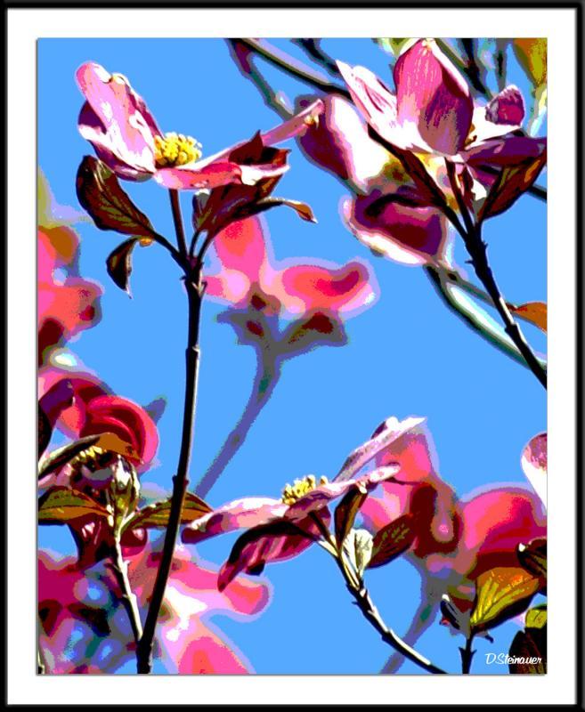 ds20050501_0027a6wF Blossoms.jpg