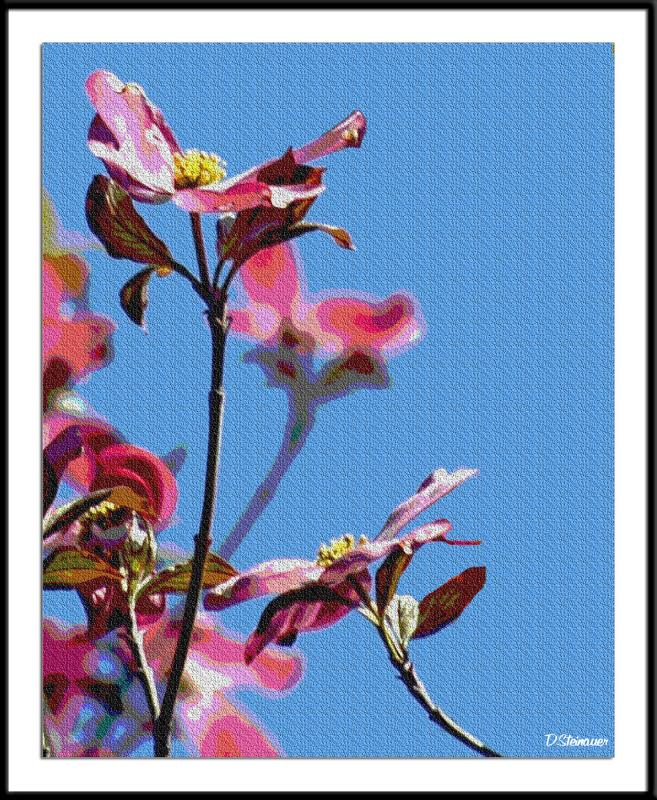 ds20050501_0027a2wF Blossoms.jpg