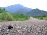 Dung Beetle Highway