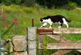 Codman Farm Cat