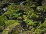 Mossy Rocks in Creeklet