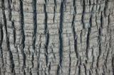 Lower Palm Tree Bark
