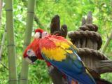 Animal Kingdom Parrots