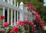 Rose Cottage fence