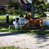 Joop's Dog Log - Tuesday October 12