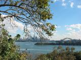 Very Australian picture. Kookaburra in the tree at left, Sydney skyline.