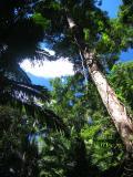 Rainforest, Fraser Island.
