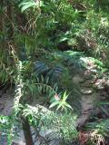 Sand creek bed, Fraser Island.