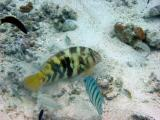 Parrot fish and others.