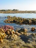 Reef at low tide looking back towards Heron Island.