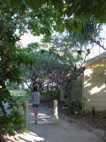 Cherrie walking through nesting noddy gauntlet.