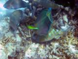More parrot fish.