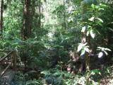Rainforest at Paluma.