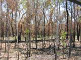 Site of a recent bush fire.