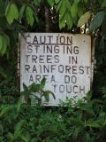 Don't touch anything in the rainforest.