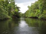 A tributary of the Daintree River.