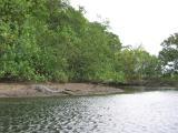 Large male Crocodile basking.
