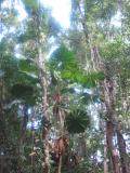 Foliage in the rainforest.