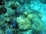 Coral on the Great Barrier Reef.