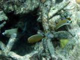Various fish.