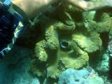 Our guide with a large giant clam.