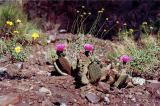 Cactus and wildflowers blooming in May