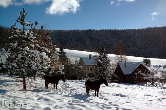 Chevaux-en-hiver