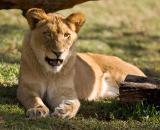 san_diego_wild_animal_park