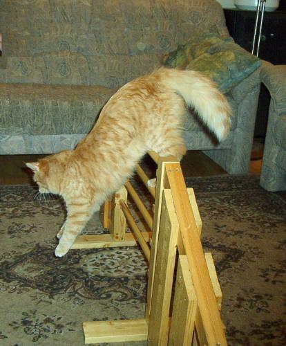 Linda  - the agi cat!!