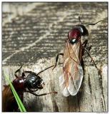 ants4735.jpg