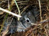 bunny8215.jpg