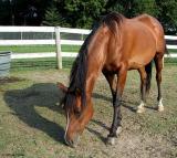 horse7223.jpg
