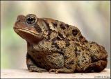 toad6754cs.jpg