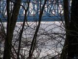 Peeking through the trees.jpg(232)