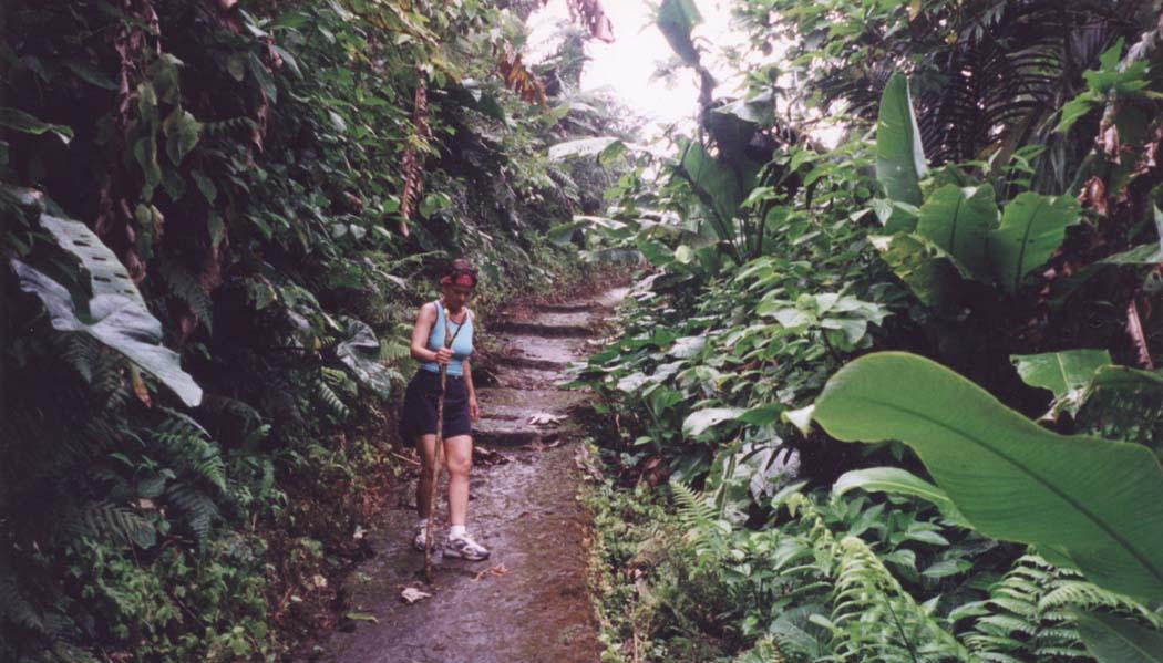 Afoot In The Elfin Forest: Mt Scenery, Saba, Dutch West Indies