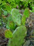 cactus 02.jpg