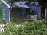 4307 blue house glories G1.jpg
