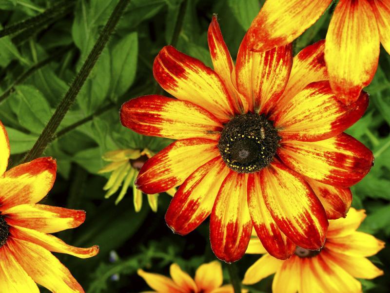 Sunflower, Anchorage, Alaska, 2002