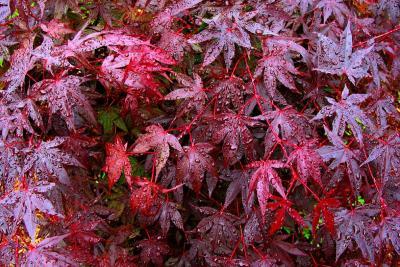 Wet Leaves, Ipswich, Massachusetts, 2002