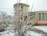 Beautiful Snow, I had never experienced snow before going to Afghanistan
