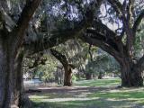 New Orleans City Park Ancient Oak Grove