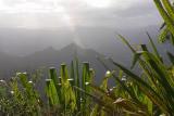 Ferns near top of Mt Warning